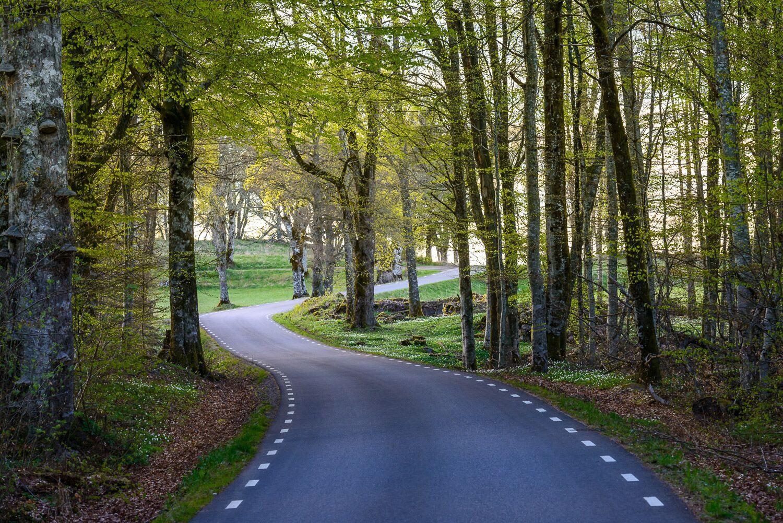 En slingrande väg genom vitsippor och bokträd i Fristadbygden